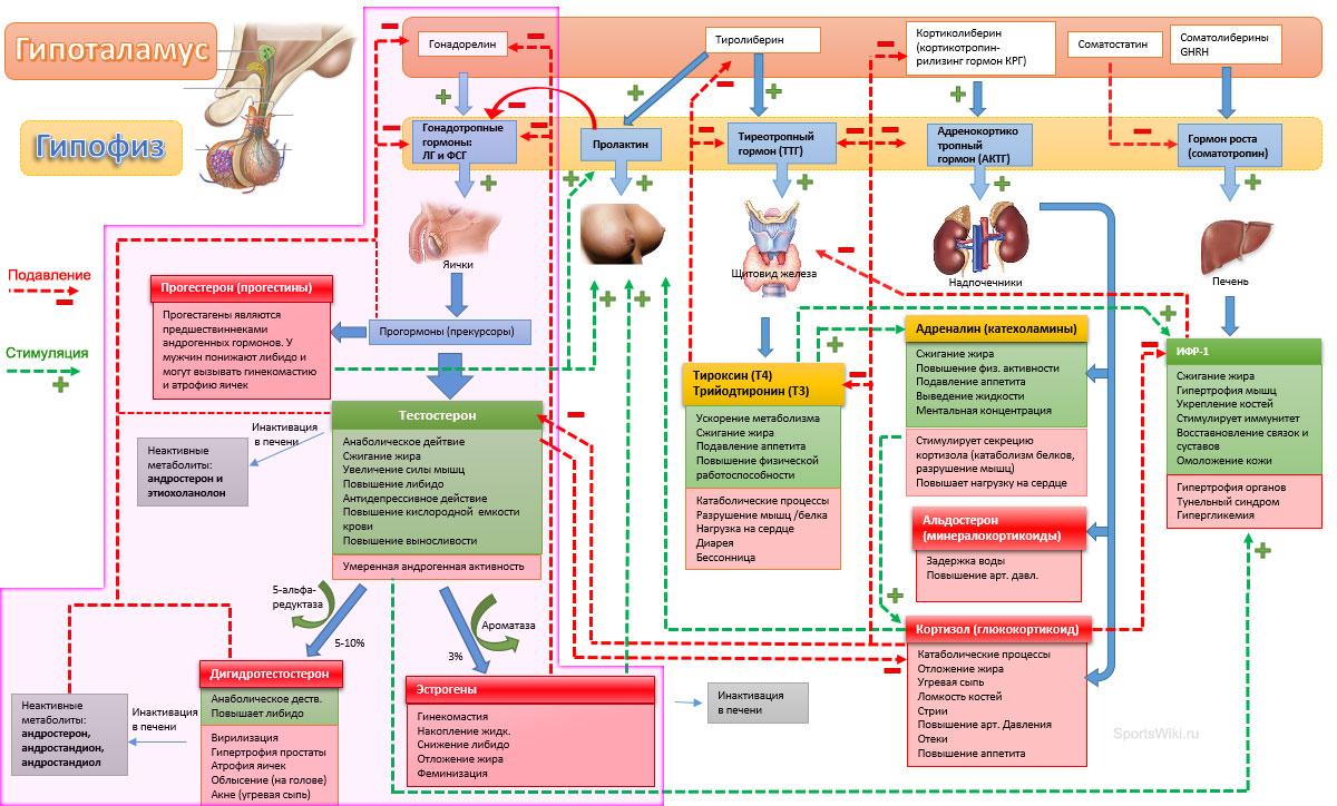 emberi koriongonadotropin a fogyáshoz fogyás 100 kg felett